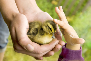 girl and duckling