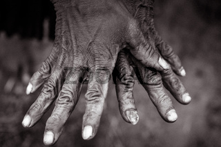 Womans wrinkled hands