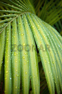green palm leaf with water drops