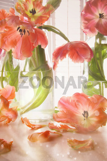 Closeup of tulips near window