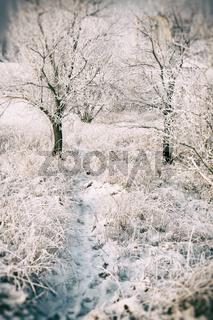 Beautiful winter snowy landscape