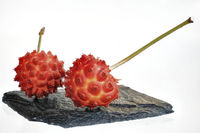 On a black stone plate with a white background are two red ripe strawberry tree fruits