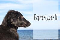 Dog At Ocean, Text Farewell