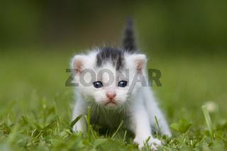 Kaetzchen / Kitten / 3 Wochen / 3 Weeks