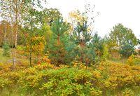 Early autumn landscape.