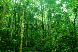 Tropical dense forest