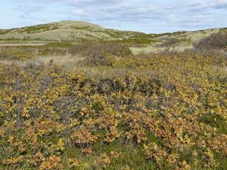 Herbstfarben auf Sylt
