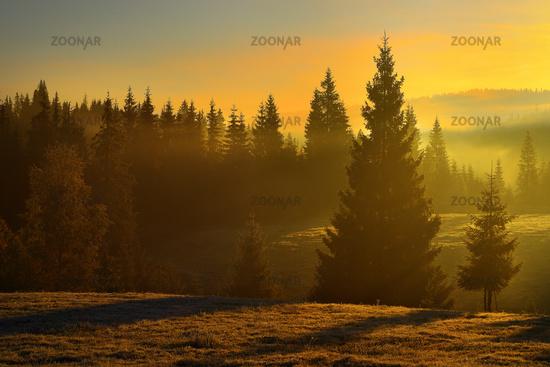 beautiful sunrise in the woods