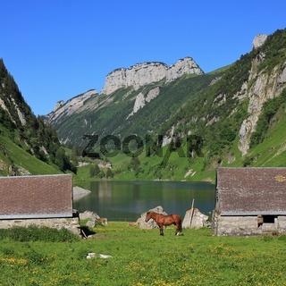 Sheds and horse at lake Fahlensee.