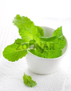 frische Minze in Schale / fresh mint in bowl