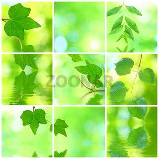 Collage von grünen Blättern