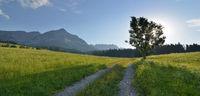 in the morning in the Wilden Kaiser in Tyrol