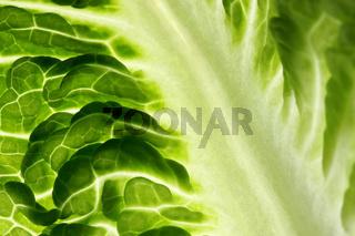 Salatblat