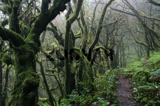 Nationalpark Garajonay, Wanderweg