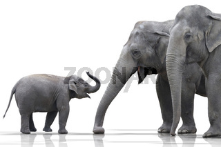 Elefantenfamilie wd379