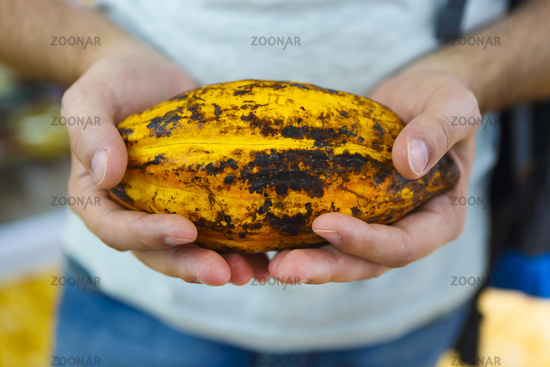 Cocoa pod in mans hand