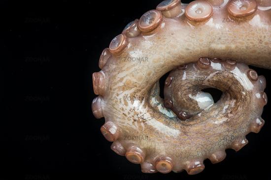 Octopus tentacles closeup detail view