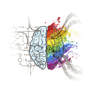 Technical and art hemispheres on human brain, left and right brain functions concept on white