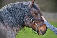 Child strokes horse