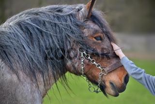 Kind streichelt Pferd