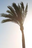 Big plant palm tree beautiful photo