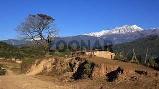 Annapurna range and tree