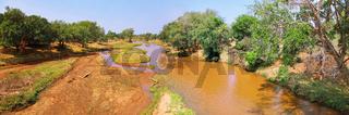 Frisches Grün am Luvuvhu Fluss im Kruger Nationalpark, Südafrika, fresh Green at Luvuvhu river at Kruger National Park, South Africa