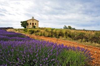 Kapelle und Lavendel, Entrevennes, Provence