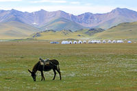 Mule and Yurt Camp at Song Kol Lake, Central Kyryzstan