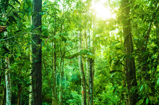 Incredible tropical jungle