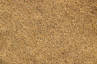 Macro close up tiny grains of sand on a beach.