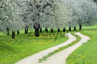 Feldweg im Frühling