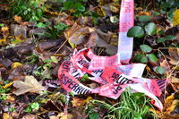 crime scene, police striped tape wrapped around trees in forest