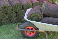 Rolling turf stacked as rolls prepared for laying
