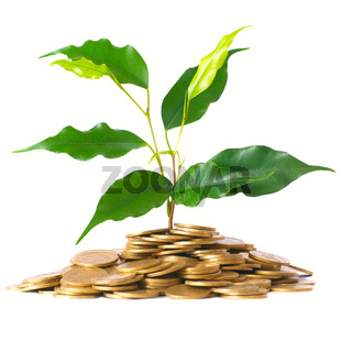 Green tree growing from the coins