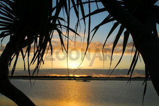 Pandanus Trees Sunrise