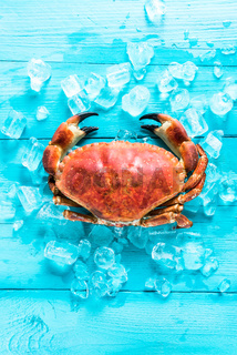 Whole fresh crab portrait