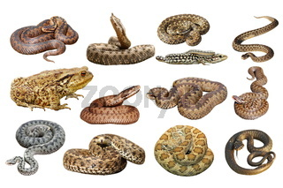 collection of herpetofauna