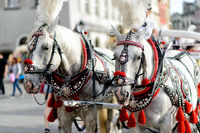 horses with carriage in Krakow