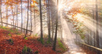 Road through an autumn forest and sun rays
