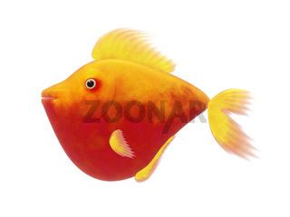 red comic fish