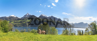 Swiss alpine scenery with the Alps