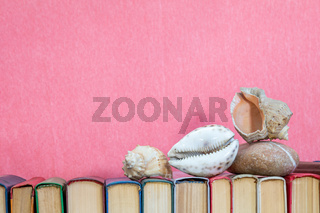 Sea shells on multicolored books at pink background. Education concept. Copy space