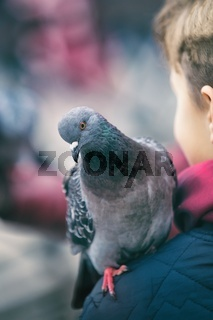 Pigeon sitting on the arm of a young boy