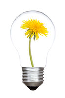 Light bulb with sow-thistle inside
