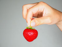 Female person holding a fresh red strawberry isolated towards gray