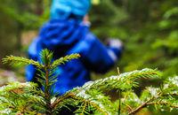 Unrecognizable boy in blue walking away from a spruce tree
