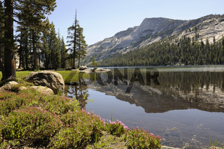 Morgenstimmung am Tenaya Lake im Yosemite Nationalpark, Kalifornien, USA