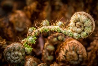 Small fern spiral