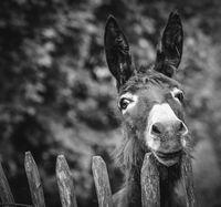 a cute Donkey